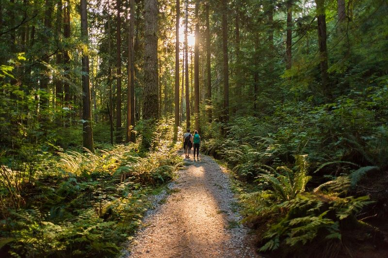 Man-and-Woman-Hikers-Admiring-Sunbeams-Streaming-Through-Trees-cm